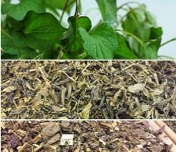 유기농어성초생초(300g) ,자소엽 150g ,녹차150g